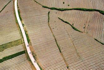 陕西洛南:锦绣大地蕴丰收