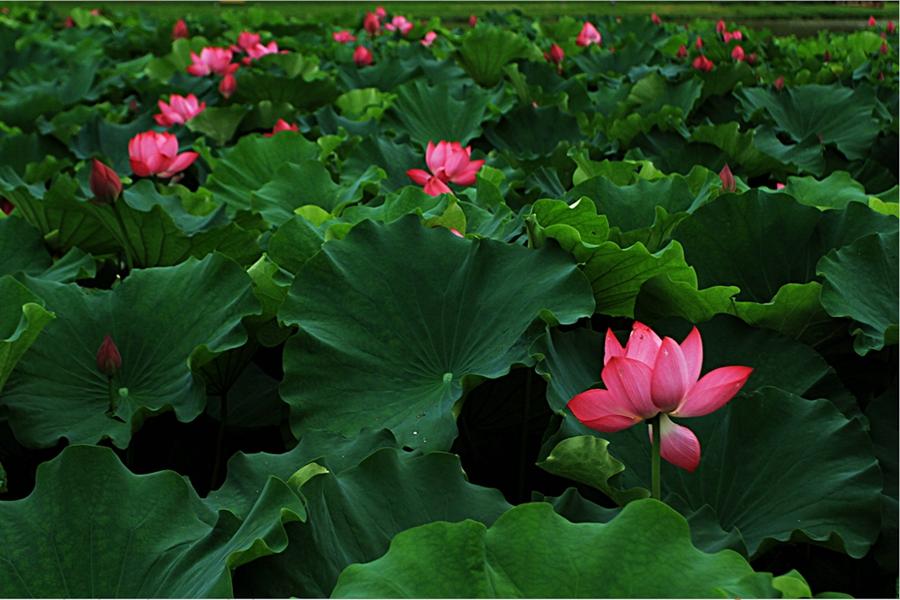浐灞16处花田20余种花卉争奇斗艳