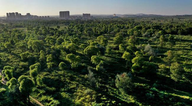陕西靖边:沙漠中的森林城市