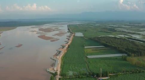 陜西大荔:黃河岸邊萬畝荷田